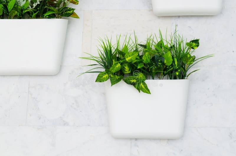 白色罐的绿色植物在墙壁,垂直从事园艺上在内部 库存图片