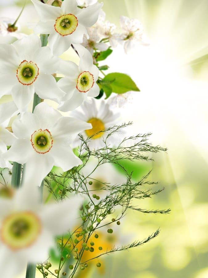 白色美丽的花的图象在庭院特写镜头的 免版税图库摄影