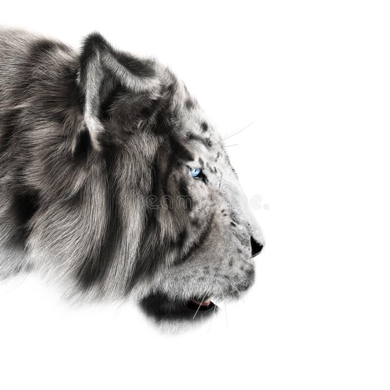 白色老虎偷偷靠近它在白色背景祈祷 库存例证