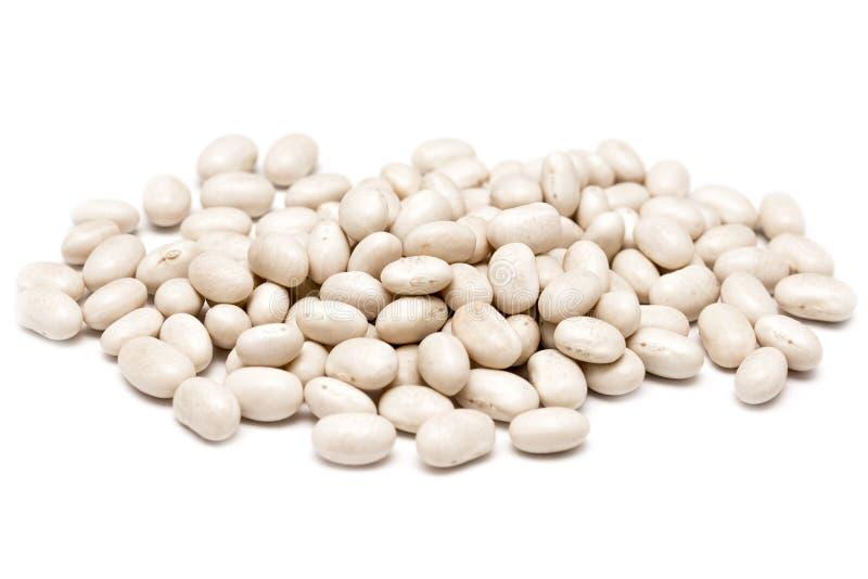 白色肾形的豆 库存照片