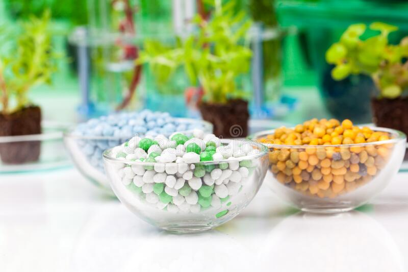 白色背景下植物生长的营养 免版税库存照片