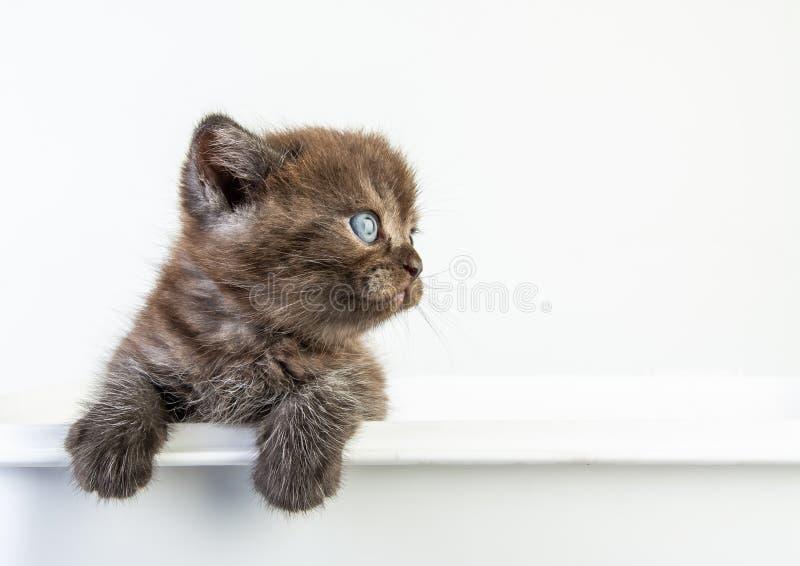 白色背景中的小猫可爱美女 免版税库存照片
