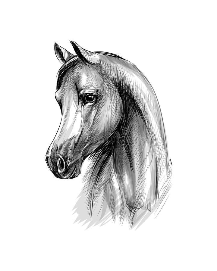白色背景中的马头肖像 手绘草图 库存例证