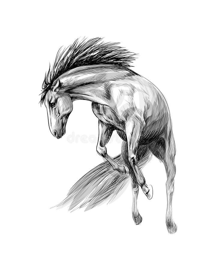 白色背景中的马疾驰 手绘草图 皇族释放例证