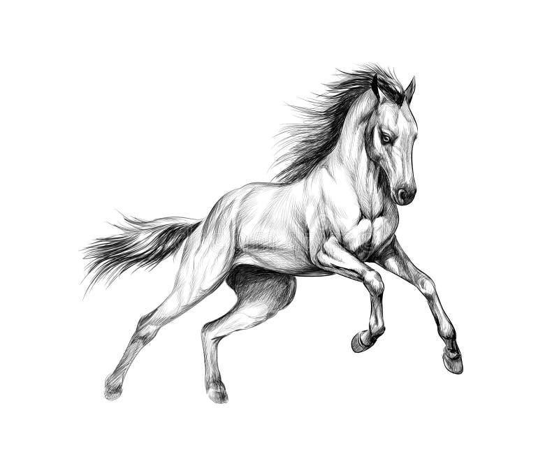 白色背景中的马疾驰 手绘草图 库存例证