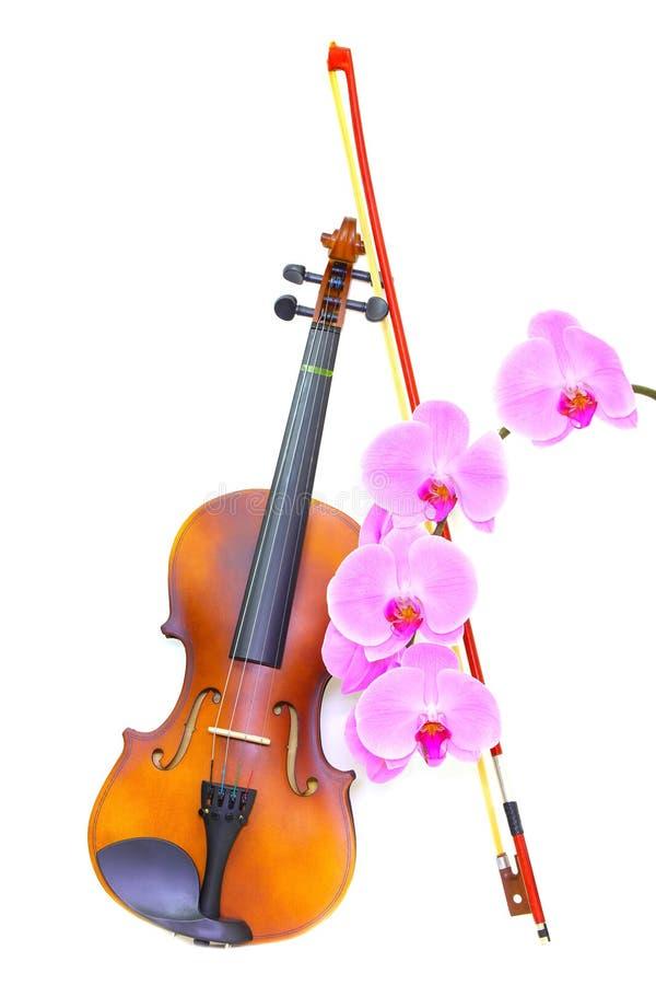 白色背景中突显的古典小提琴和蝴蝶结 免版税库存照片
