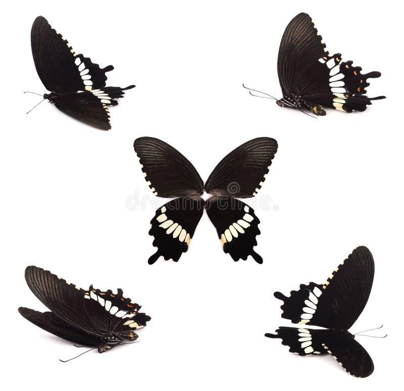 白色背景中突显的黑色蝴蝶组 免版税库存图片