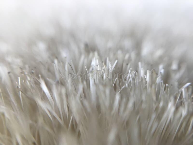 白色草特写镜头-冬天刷子 免版税库存照片
