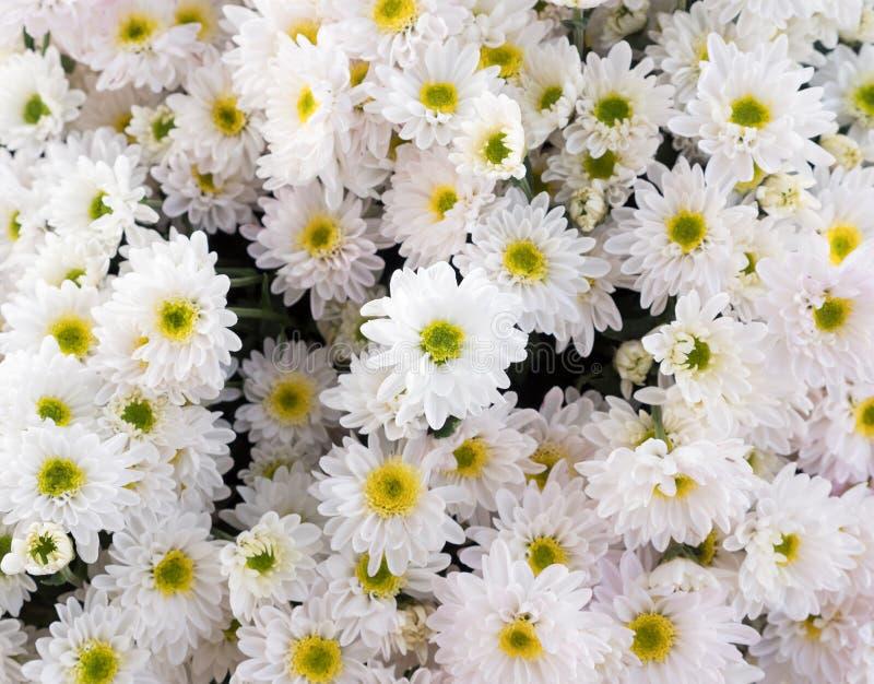 白色菊花花花束的选择聚焦 库存图片