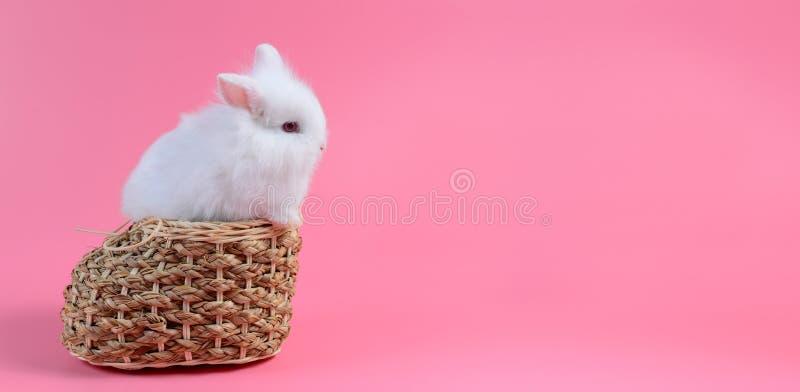 白色蓬松兔子和红色注视在方平组织坐桃红色 库存照片