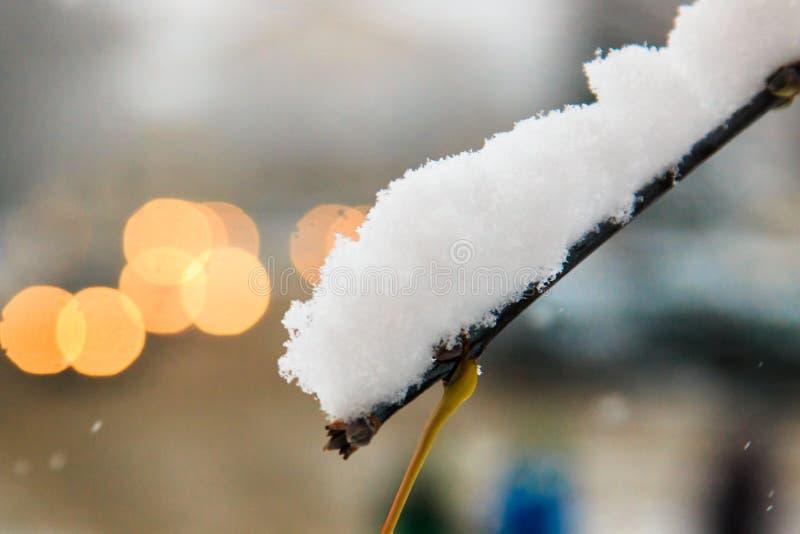白色蓬松雪雪盖帽在落叶树分支的在汽车被弄脏的背景的有光的在城市风景 免版税图库摄影