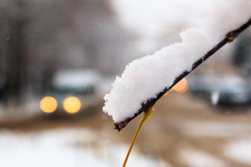 白色蓬松雪雪盖帽在落叶树分支的在汽车被弄脏的背景的有光的在城市风景 库存图片