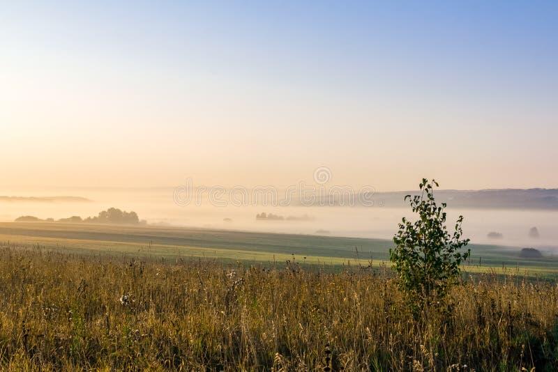 白色薄雾传播入在树和领域中的日志我 免版税库存照片