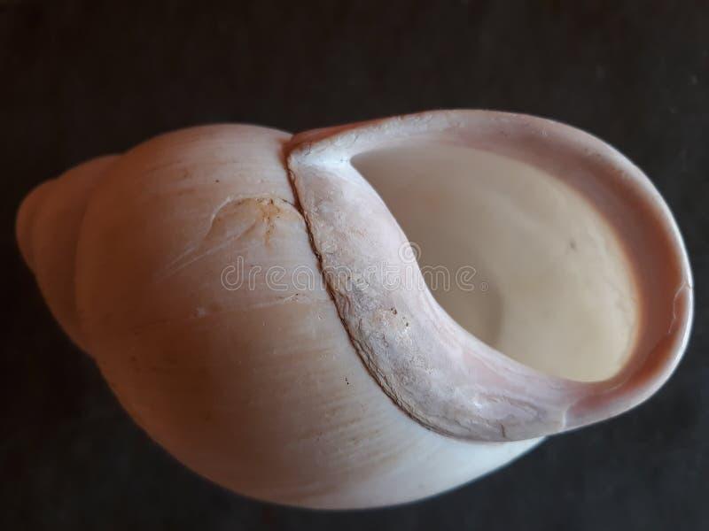白色蜗牛房子入口 图库摄影