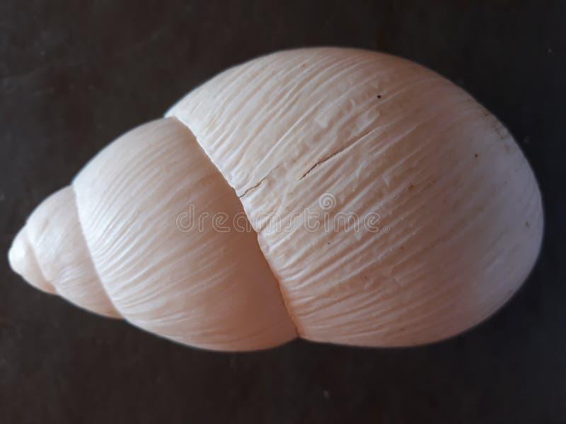 白色蜗牛房子背景 库存图片