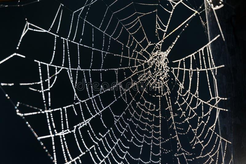 白色蜘蛛网 免版税库存照片