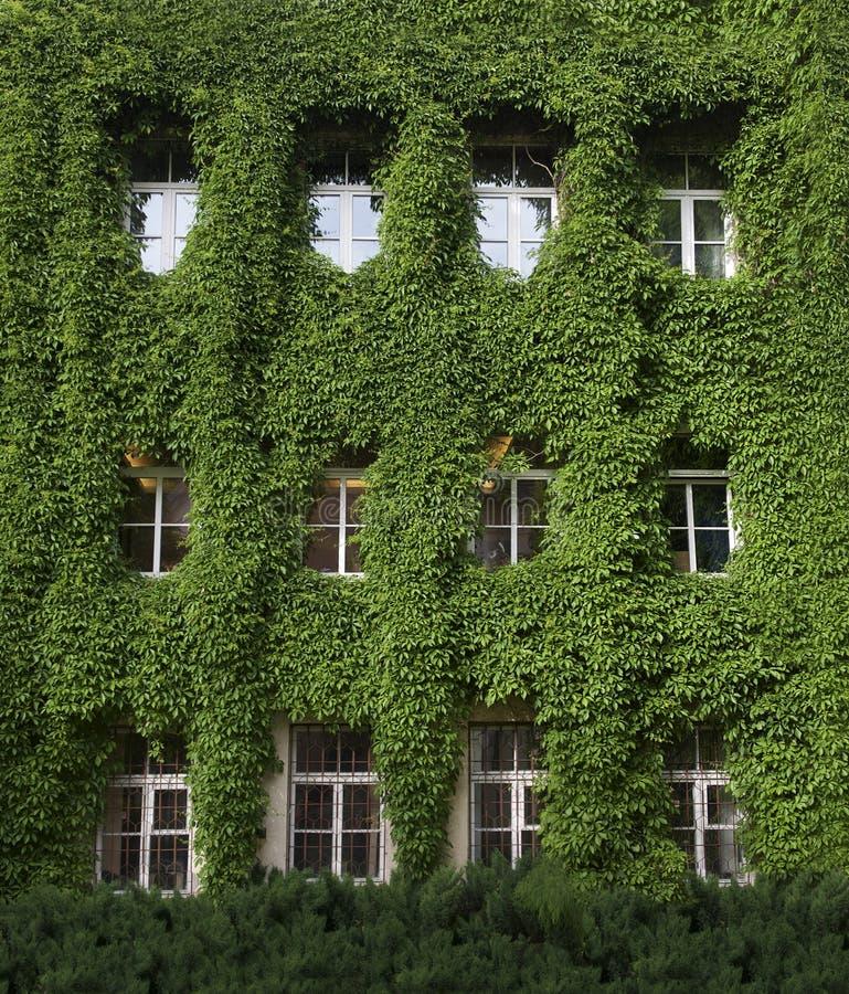 白色被构筑的窗口在绿色背景中 库存照片