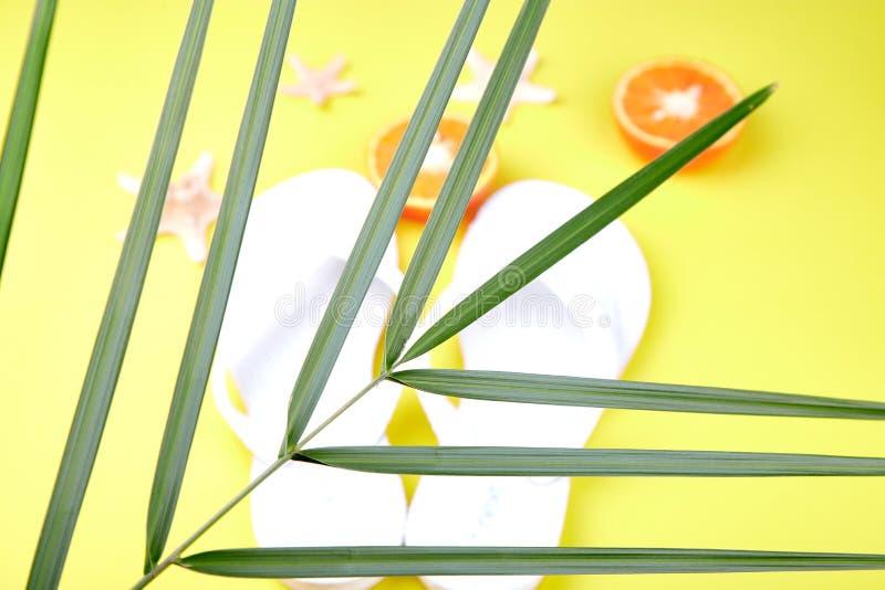 白色触发器、橙色果子、海星和棕榈 库存图片