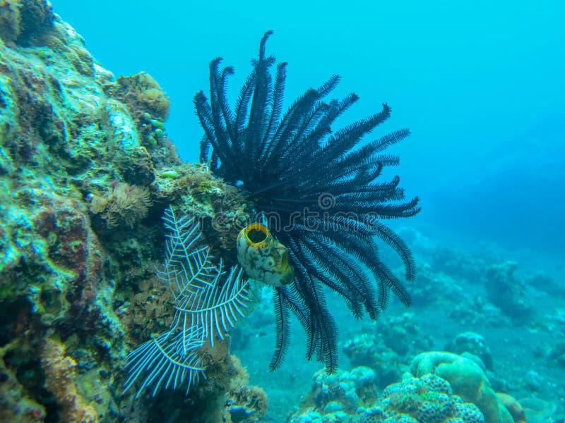 白色软的珊瑚水中有珊瑚背景 在五颜六色的礁石的佩戴水肺的潜水 生动的珊瑚的水下的摄影 免版税库存照片