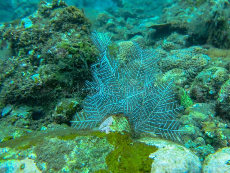 白色软的珊瑚水中有珊瑚背景 在五颜六色的礁石的佩戴水肺的潜水 生动的珊瑚的水下的摄影 免版税库存图片