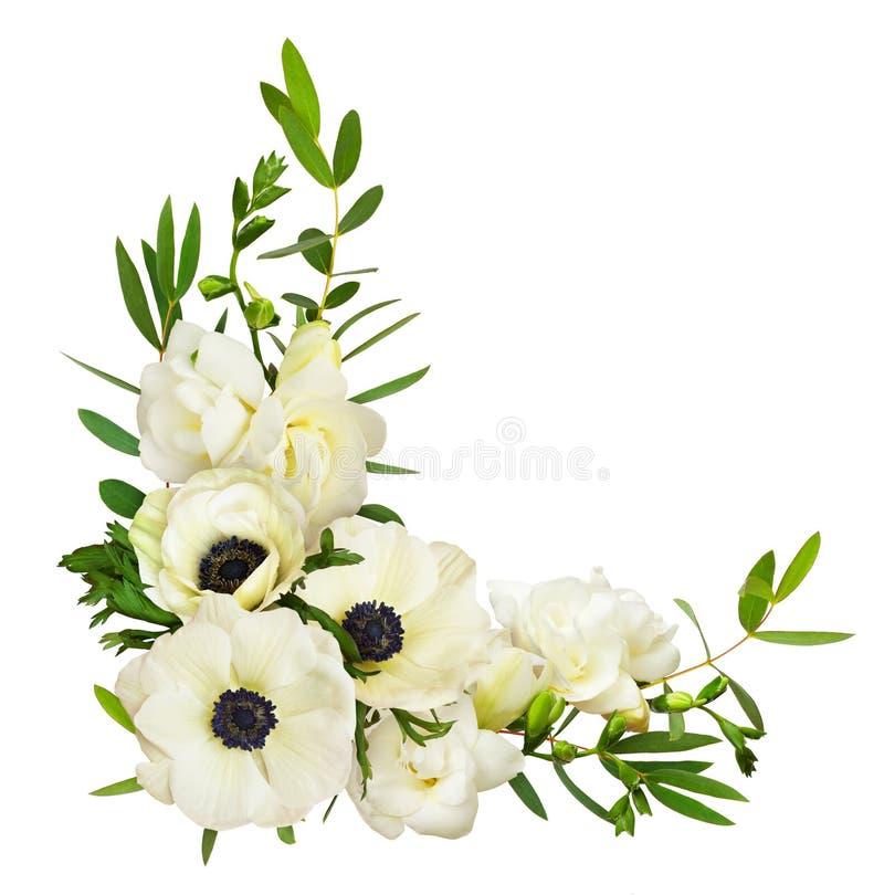 白色银莲花属、玉树叶子和小苍兰花在corne 图库摄影