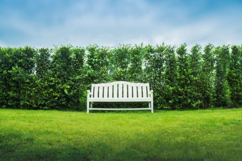 白色长凳在绿色庭院里 库存图片