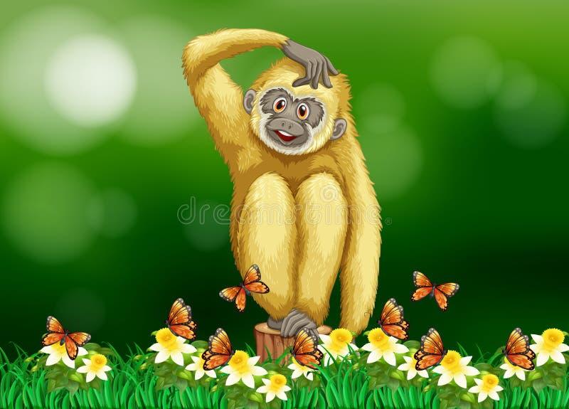 白色长臂猿坐草 向量例证