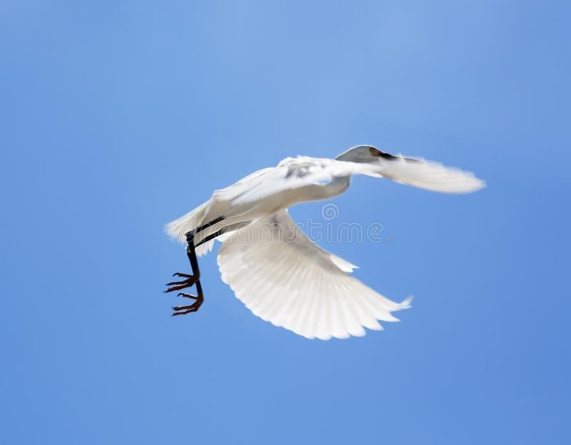 白色雪白鹭的水平的颜色图象坐在背景蓝天的屋顶 免版税库存照片
