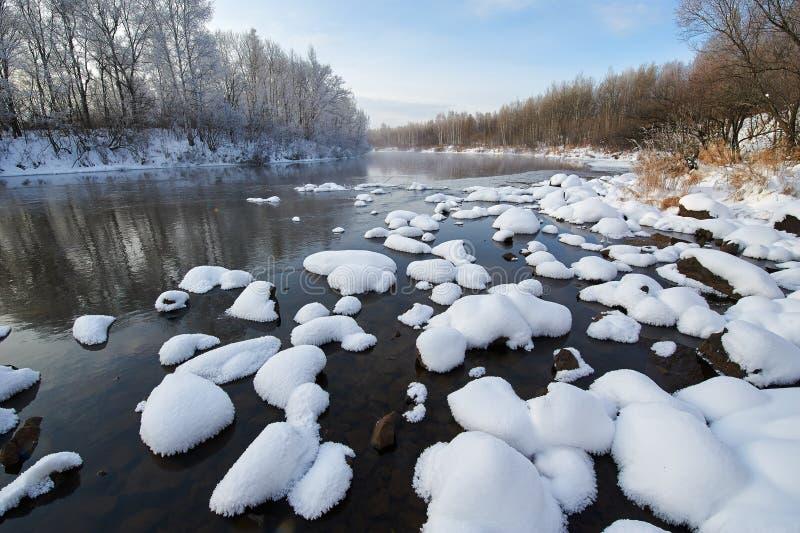 白色雪蘑菇 免版税图库摄影