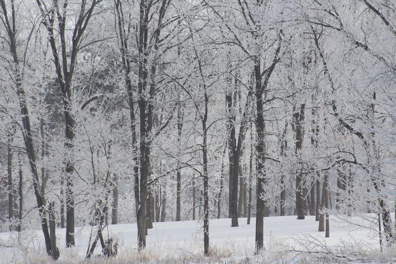 白色霜包括树 免版税库存图片
