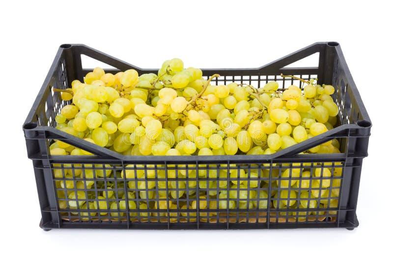 白色食用葡萄(葡萄属)在塑料筐 图库摄影