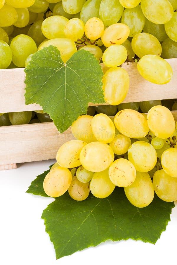 白色食用葡萄(葡萄属)群接近的看法  图库摄影