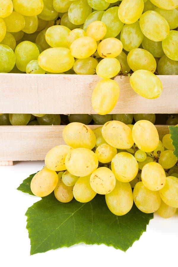 白色食用葡萄(葡萄属)群接近的看法  免版税库存图片