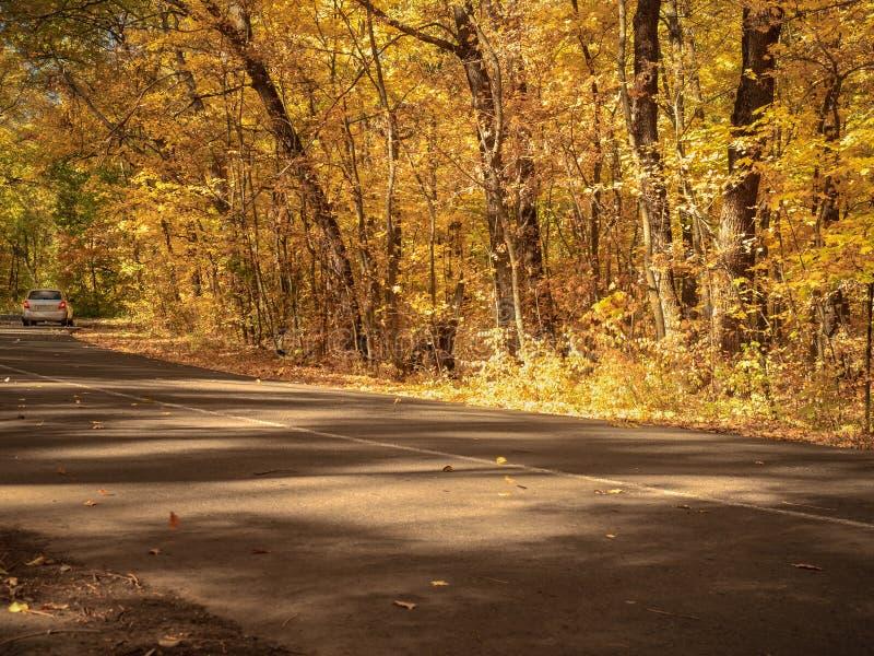 白色驾车在木头的一条有风路 在秋天树森林曲拱的柏油路在路线上的 黄色叶子 图库摄影