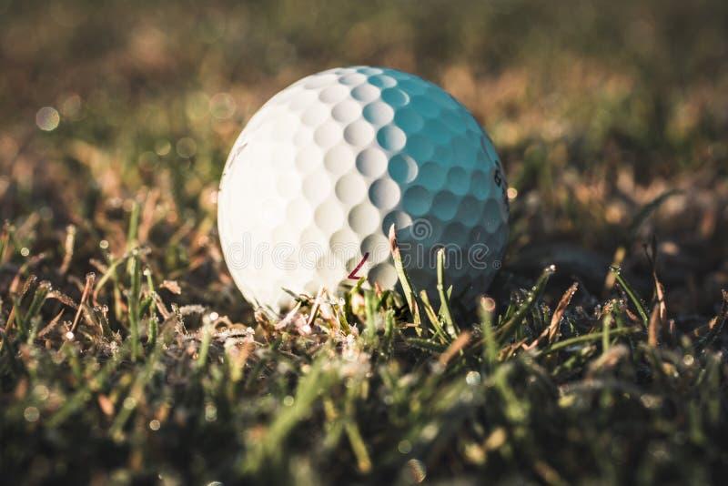 白色高尔夫球 库存照片