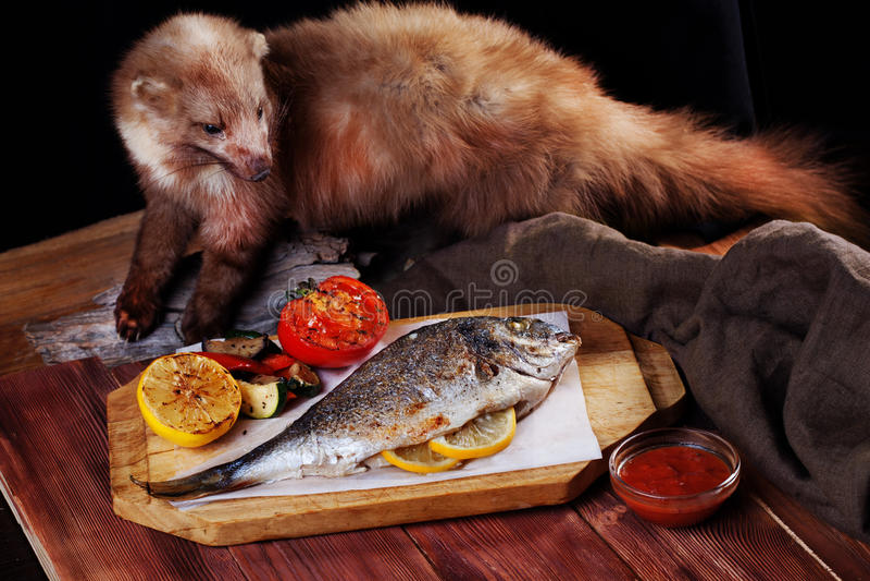 白色鱼dorado整个菜,雪鱼貂皮充塞了动物标本剥制术 免版税图库摄影
