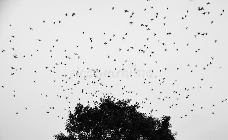 黑&白色鸟 免版税库存照片
