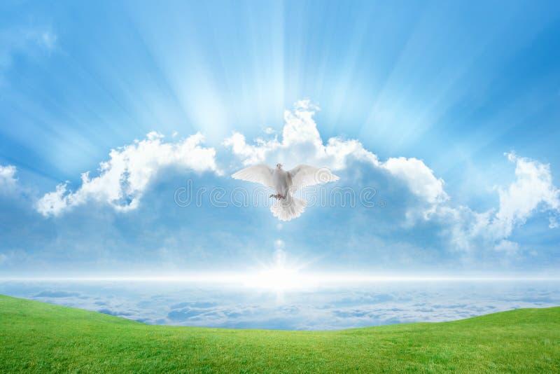 白色鸠圣灵鸟在天空飞行 免版税库存照片