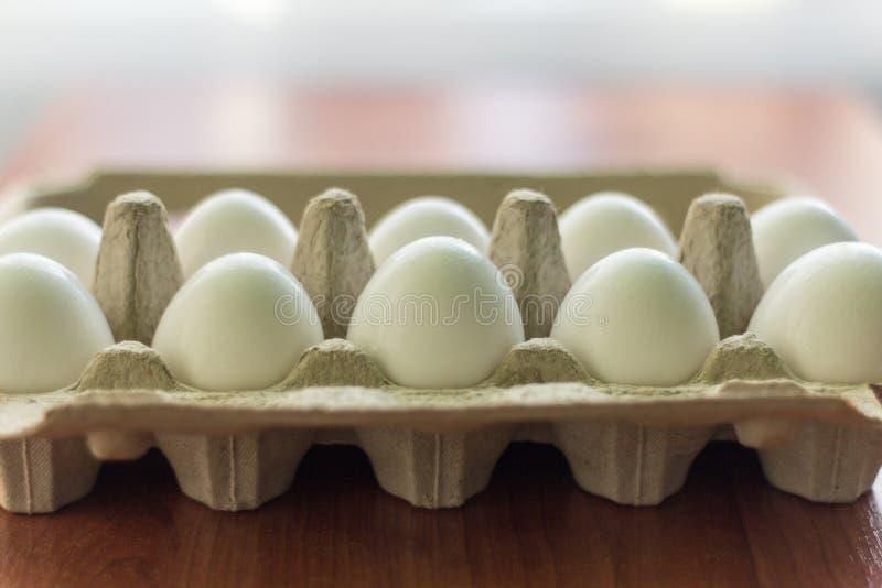 白色鸡在有细胞的一个纸板箱怂恿 免版税图库摄影