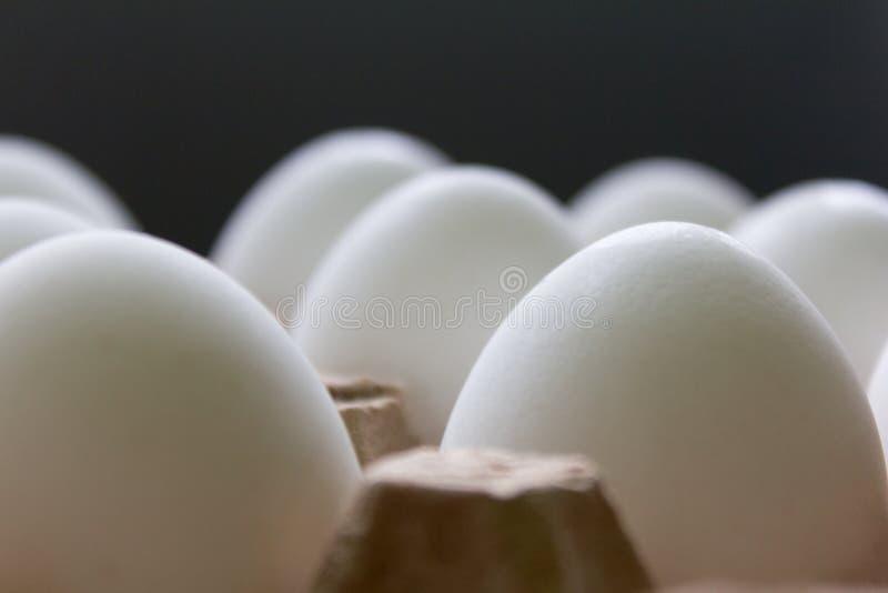 白色鸡在纸板箱特写镜头怂恿预期复活节 图库摄影