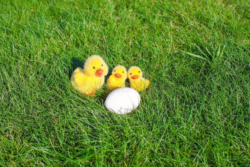 白色鸡鸡蛋和黄色鸡以绿色 库存照片