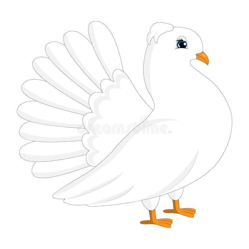 白色鸽子,鸠 向量例证