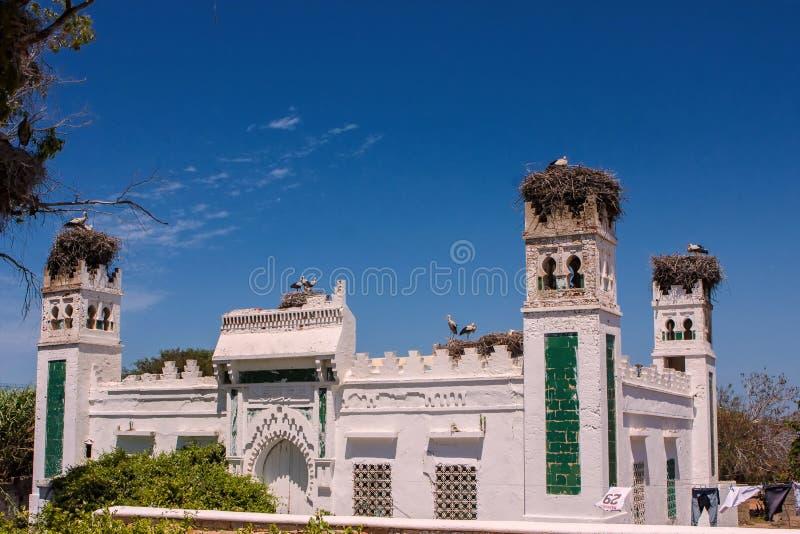 白色鹳修造伟大的猫头鹰在塔做她的家,摩洛哥 库存照片