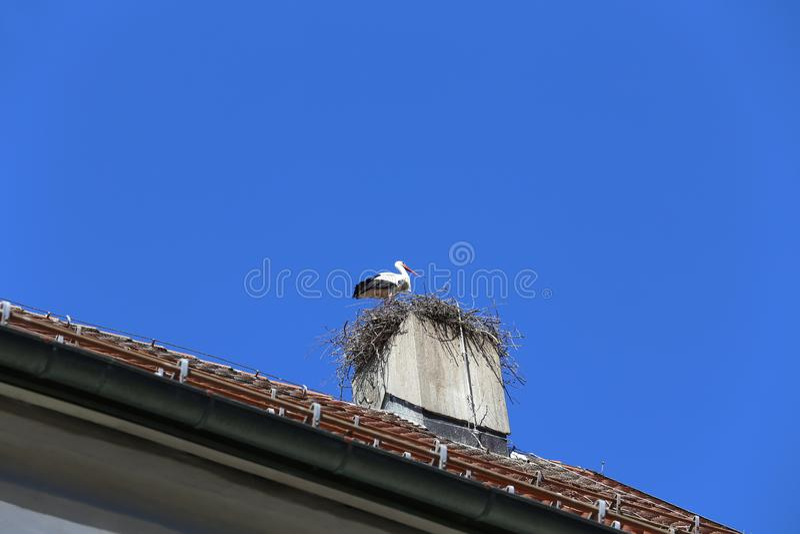 白色鹳在教会烟囱做巢 图库摄影
