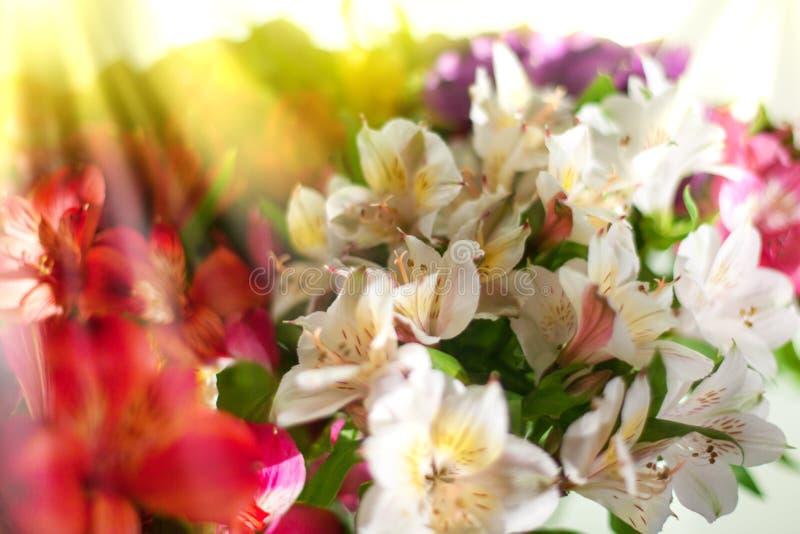 白色,桃红色和紫色百合花在被弄脏的背景特写镜头,软的焦点百合插花 免版税库存图片