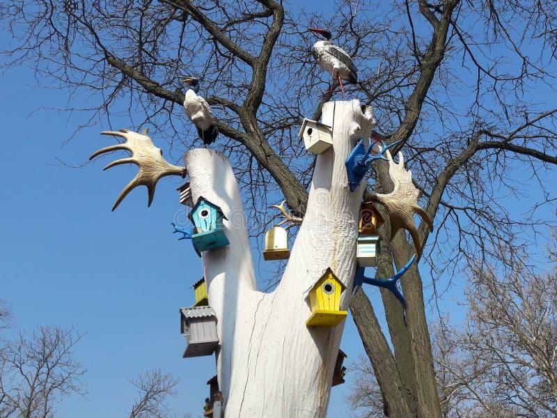 白色,神仙的树 独有 免版税库存照片
