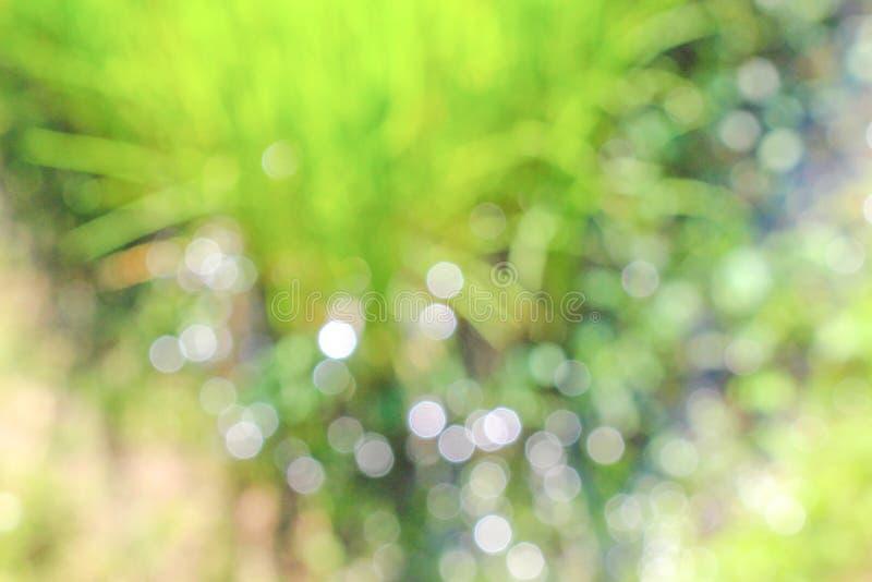 白色bokeh在米领域自然抽象样式背景中 免版税库存照片