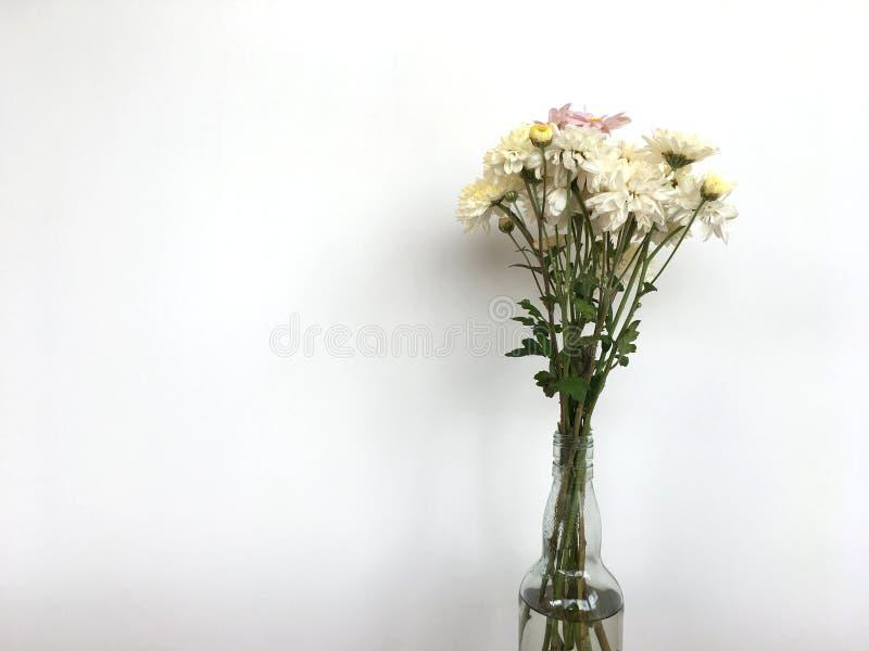 白色chrysanths开花开花在透明瓶里面用在木桌上把放的水 库存图片