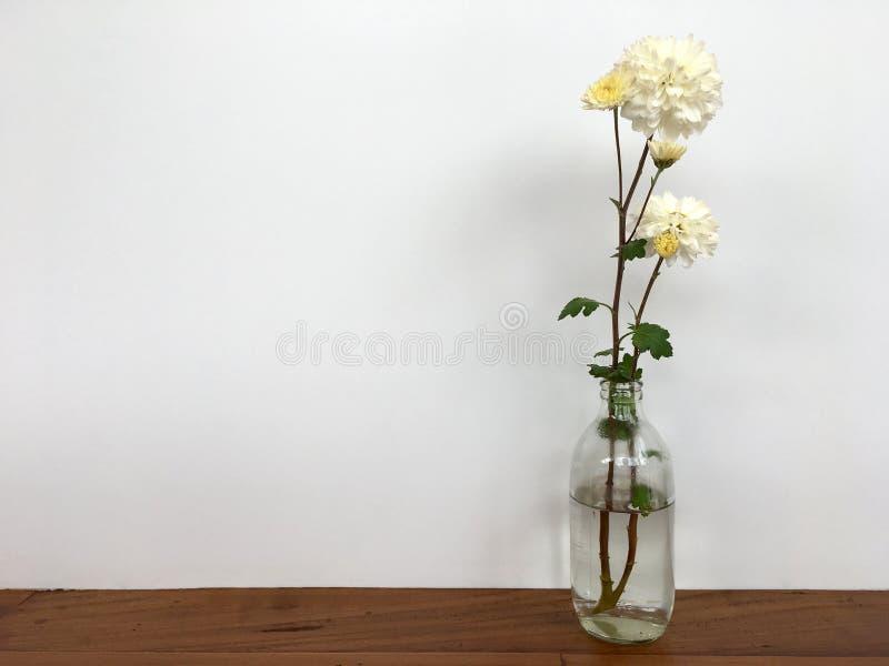 白色chrysanths开花开花在透明瓶里面用在木桌上把放的水 免版税库存图片