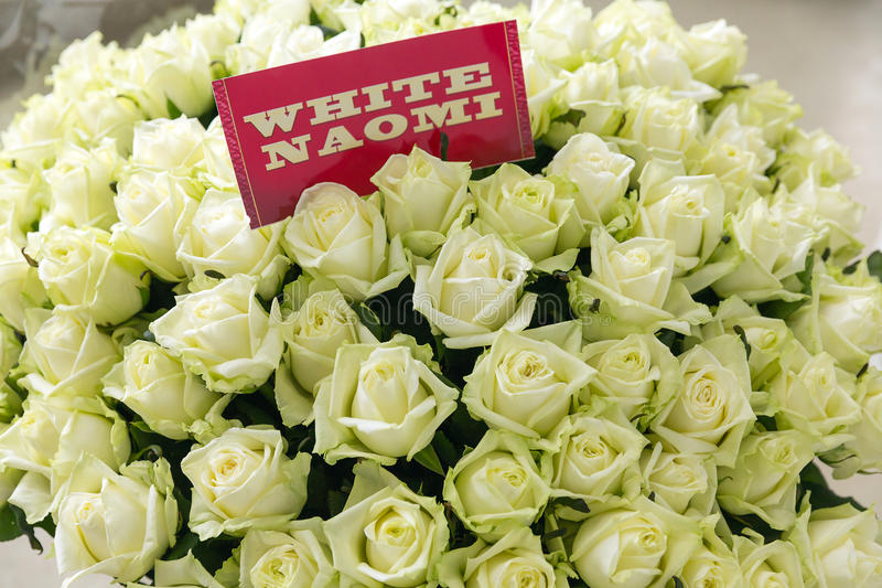 白色Naomi玫瑰色束 库存照片